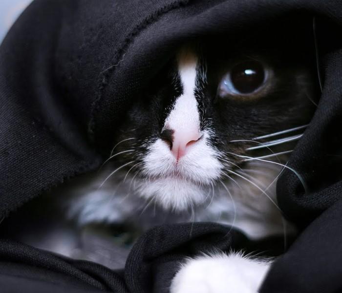 Quels accessoires Star Wars pour vos animaux de compagnie?